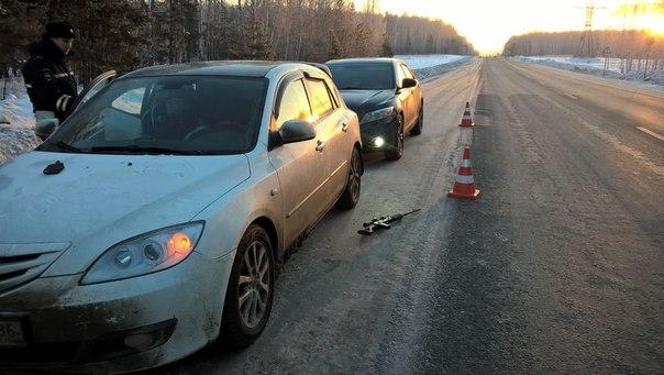 Возвращаясь с охоты по трассе Тюмень-Екатеринбург, водитель увидел «зверька» и решил его застрелить