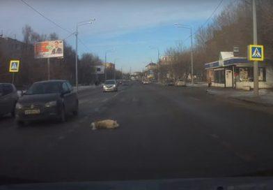 «Сбил беднягу на пешеходном переходе». ВИДЕО с ул.Полевой в Тюмени