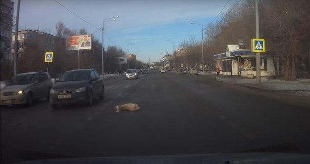 сбил собаку на Полевой