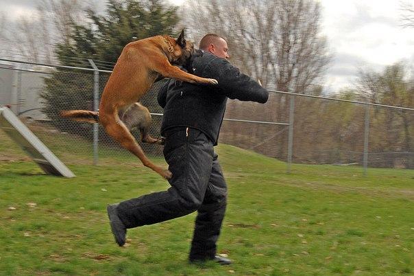 собака кусает полицейского