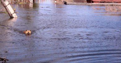 паводок в Ишиме 2017
