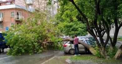 дерево на Свердлова упало