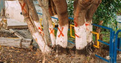 деревья Свердлова