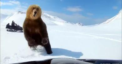 медведь курилы
