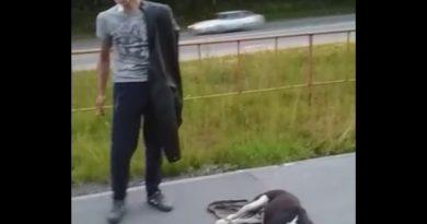 избил собаку