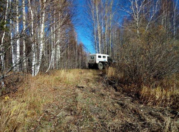 Заблудившийся в тюменских лесах охотник ночевал на дереве, опасаясь вышедшего на его след медведя