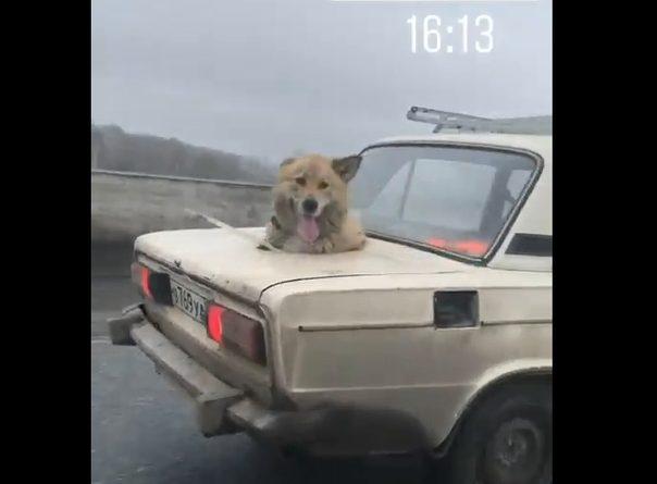 собака из Тюмени