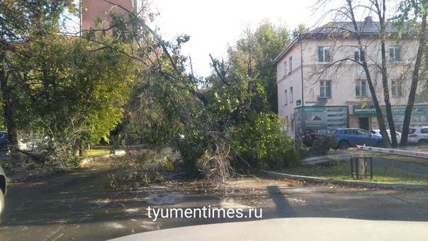 дерево упало тюмень