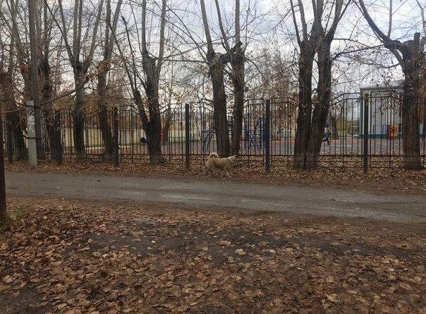 В Боровском из-за бродячих собак отменяют занятия в местной школе