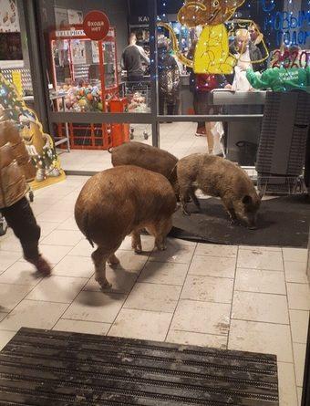 """Три поросенка посетили супермаркет в """"Европейском"""" и разбили там коньяк"""