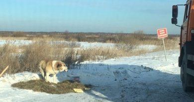 Собака, которую выбросили на тюменской объездной, обрела новых хозяев