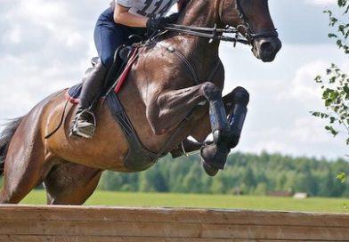 Перевернулась вместе с лошадью. Спортсменка из Тюменской области погибла во время тренировки