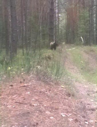 Медведь Каменка Тюмень