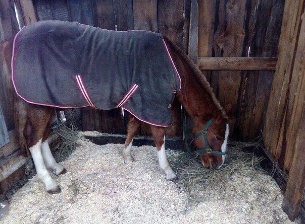 Магнат конь