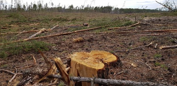 криводановский лес