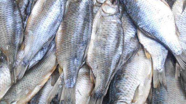 отравились рыбой