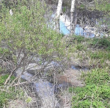 загадили реку ушаковку