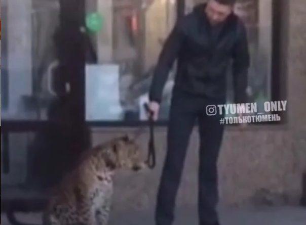 В Тюмени мужчина устроил перекур на крыльце вместе с леопардом
