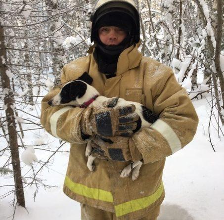 Уватские пожарные нашли в лесу собаку Чуню, которая убежала с места ДТП