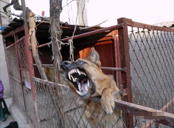 ЧП в Боровском: цепная собака набросилась на двухлетнюю девочку. Пострадавшую везут спецбортом в Москву