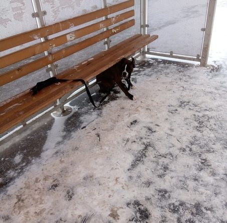 """""""Хозяева нашлись"""". Замерзшую под лавочкой на остановке собаку подобрал неравнодушный тюменец"""