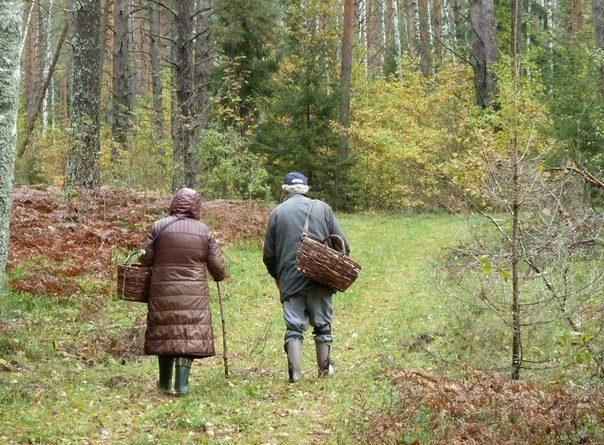 До 13 августа запрещается посещение лесов в Тюменской области