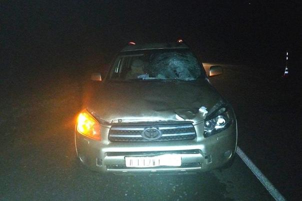 Ночью на трасса под Тобольском RAV-4 сбил насмерть пешехода