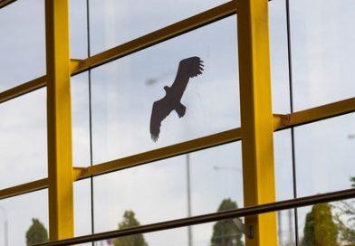 В Тюмени начнут наносить на шумозащитные экраны силуэты хищных птиц. Зачем?