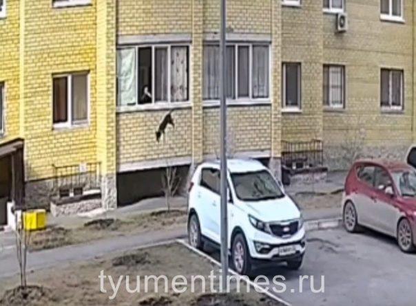 В Тюмени выбросили собаку с балкона
